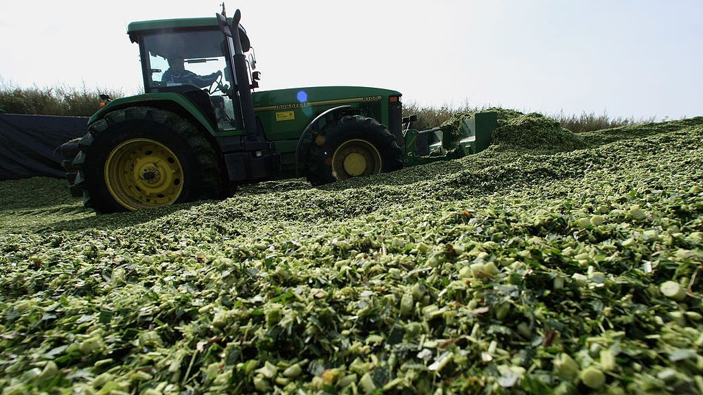 A tractor moves hackled corn plants at a bioenergy plant near Darmstadt, Germany. Interest in bioenergy as a means to cut greenhouse gas emissions continues to grow. (Ralph Orlowski/Getty Images)